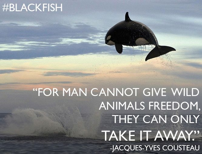 The film blackfish anylisis blackfish analysis essay